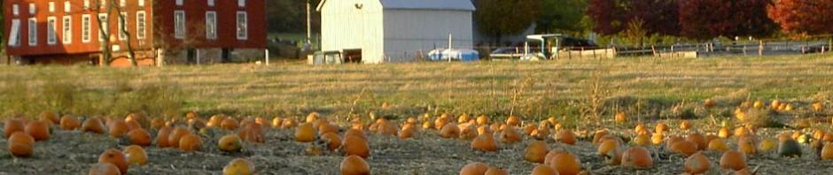 PumpkinsRedBarn