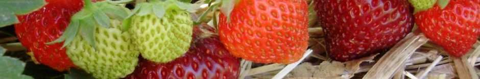 cropped-StrawberryFruit.jpg