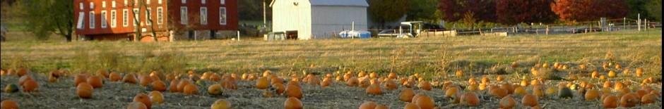 Pumpkins at the Red Barn